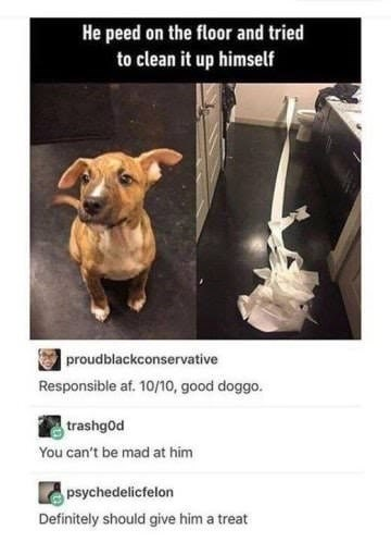 dog memes dog in bathroom with toilet paper He peed on the floor and tried to clean it up himself proudblackconservative Responsible af. 10/,good dogg trashgod You can't be mad at him psychedelicfelon Definitely should give him a treat