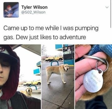 dog memes picture of dog at petrol pump Wilson Came up to me while I was pumping gas. Dew just likes to adventure an