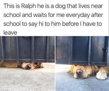 dog memes dog sticking nose under gate waiting for schoolboy to say hi