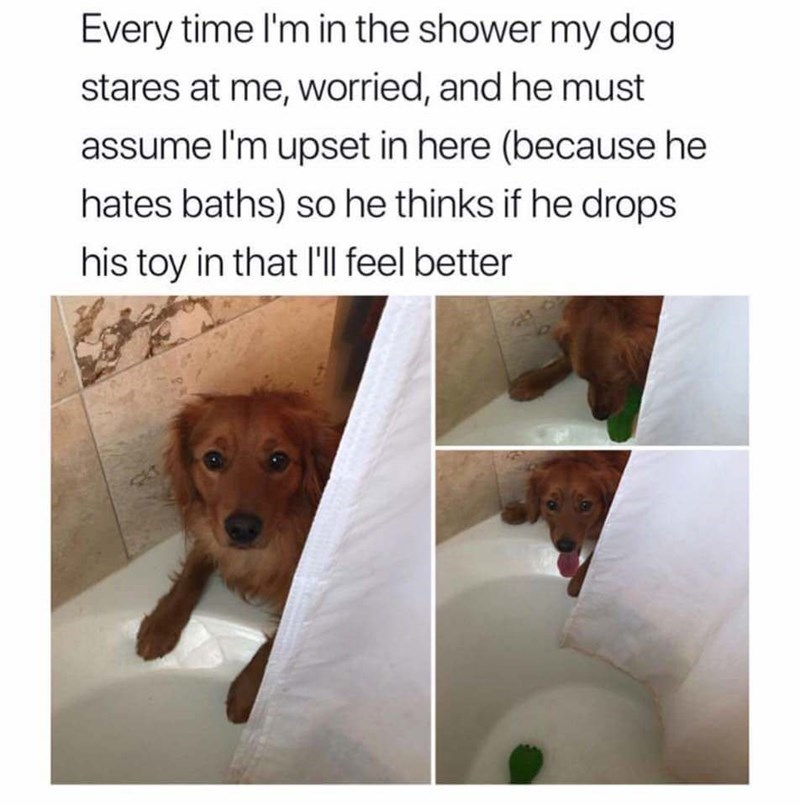 dog memes dog sitting next to shower Every time I'm in the shower my dog stares at me, worried, and he must assume I'm upset in here (because he hates baths) so he thinks if he drops his toy in that I'll feel better