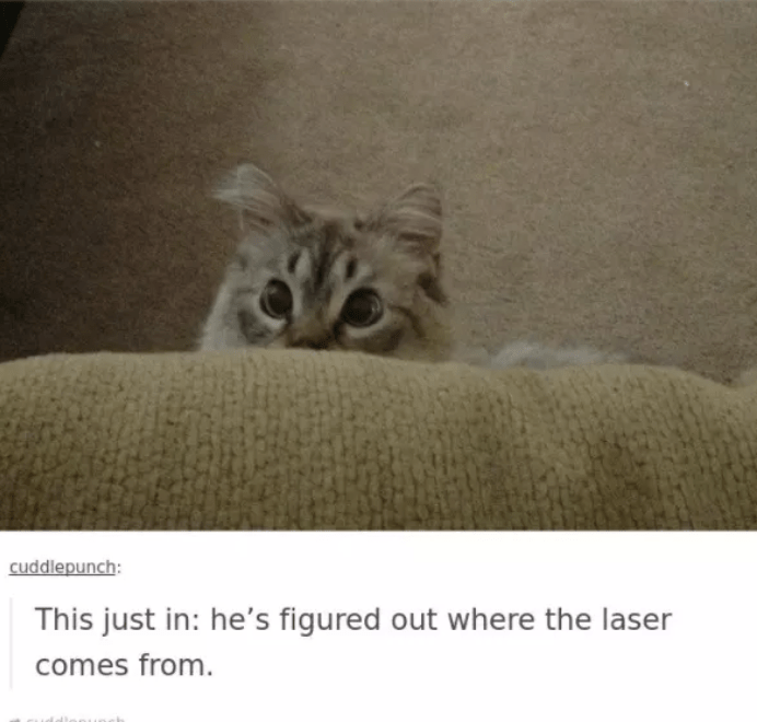 Cat - cuddlepunch: This just in: he's figured out where the laser comes from.