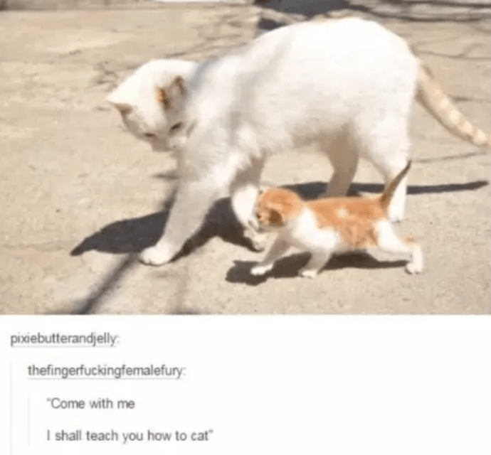 """Cat - pixiebutterandjelly thefingerfuckingfemalefury: """"Come with me I shall teach you how to cat"""