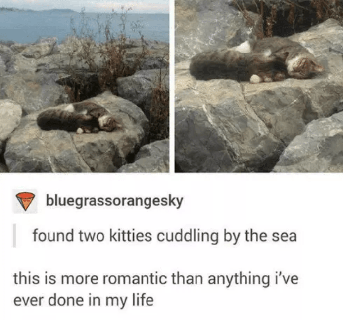 Rock - bluegrassorangesky found two kitties cuddling by the sea this is more romantic than anything i've ever done in my life