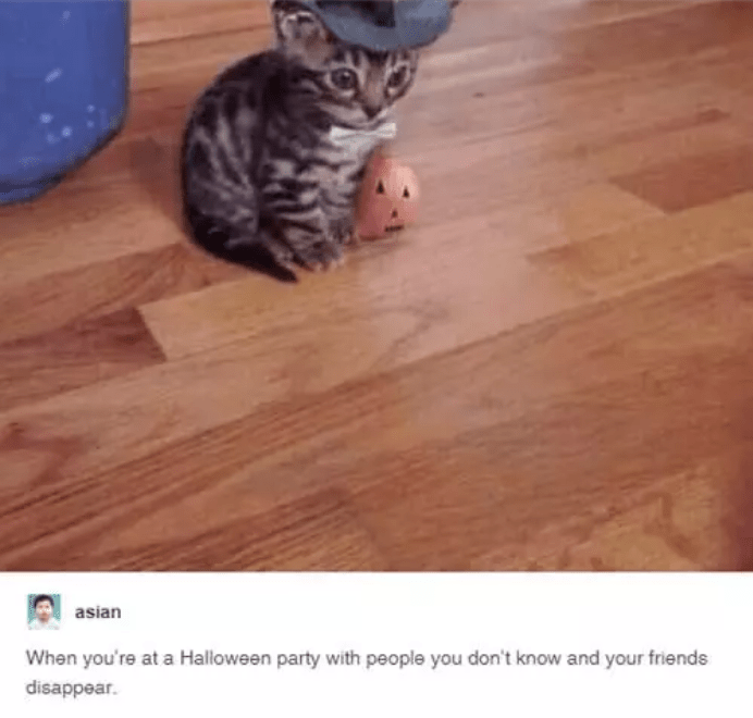 Cat - asian When you're at a Halloween party with people you don't know and your friends disappear.