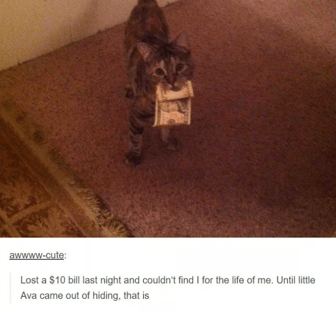 Cat - awwww.cute: Lost a $10 bill last night and couldn't find I for the life of me. Until little Ava came out of hiding, that is
