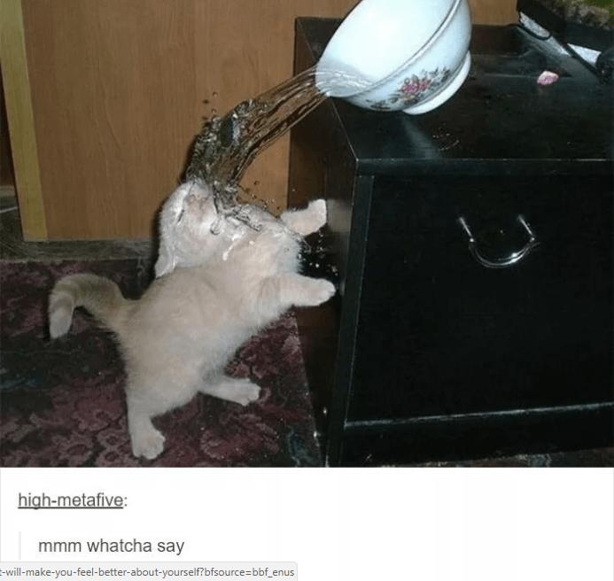 Cat - high-metafive: mmm whatcha say