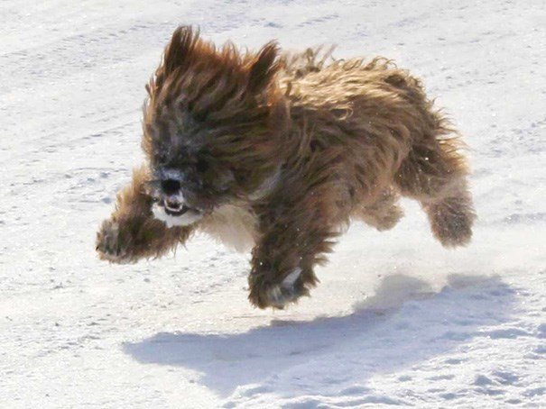 cute dog running through the snow