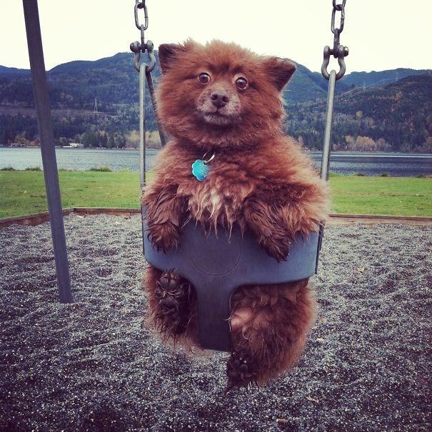 cute dog in a swing