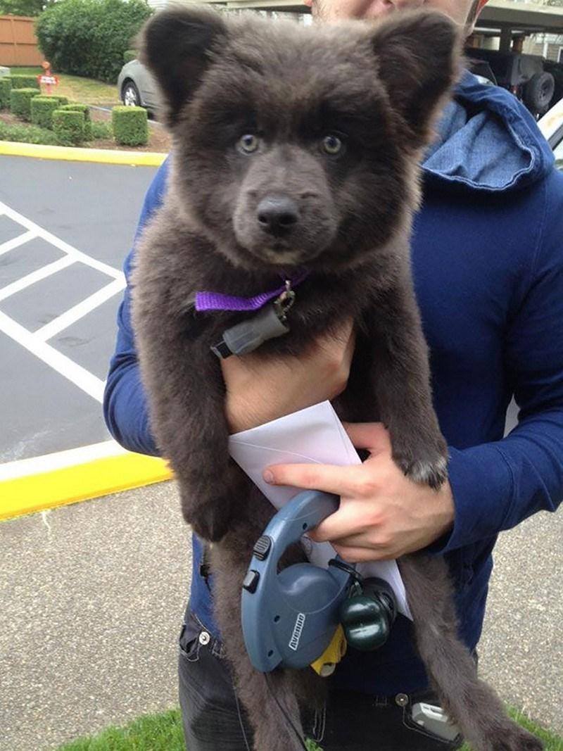 cute furry black puppy