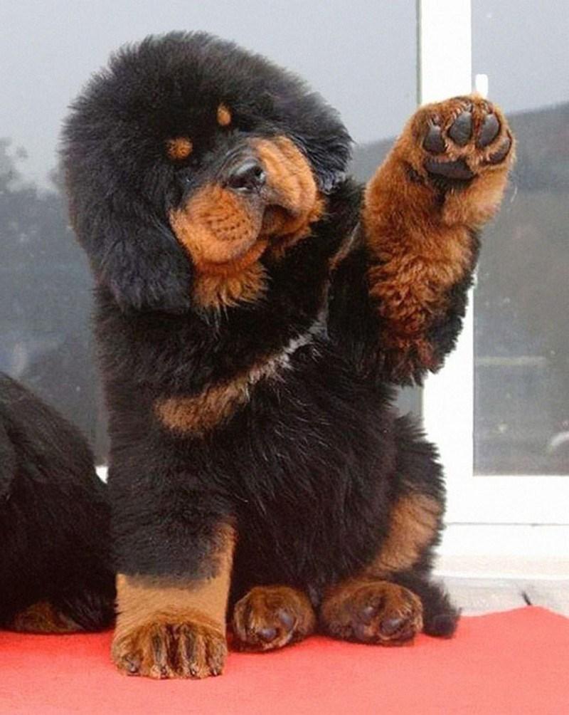 cute canidae puppy