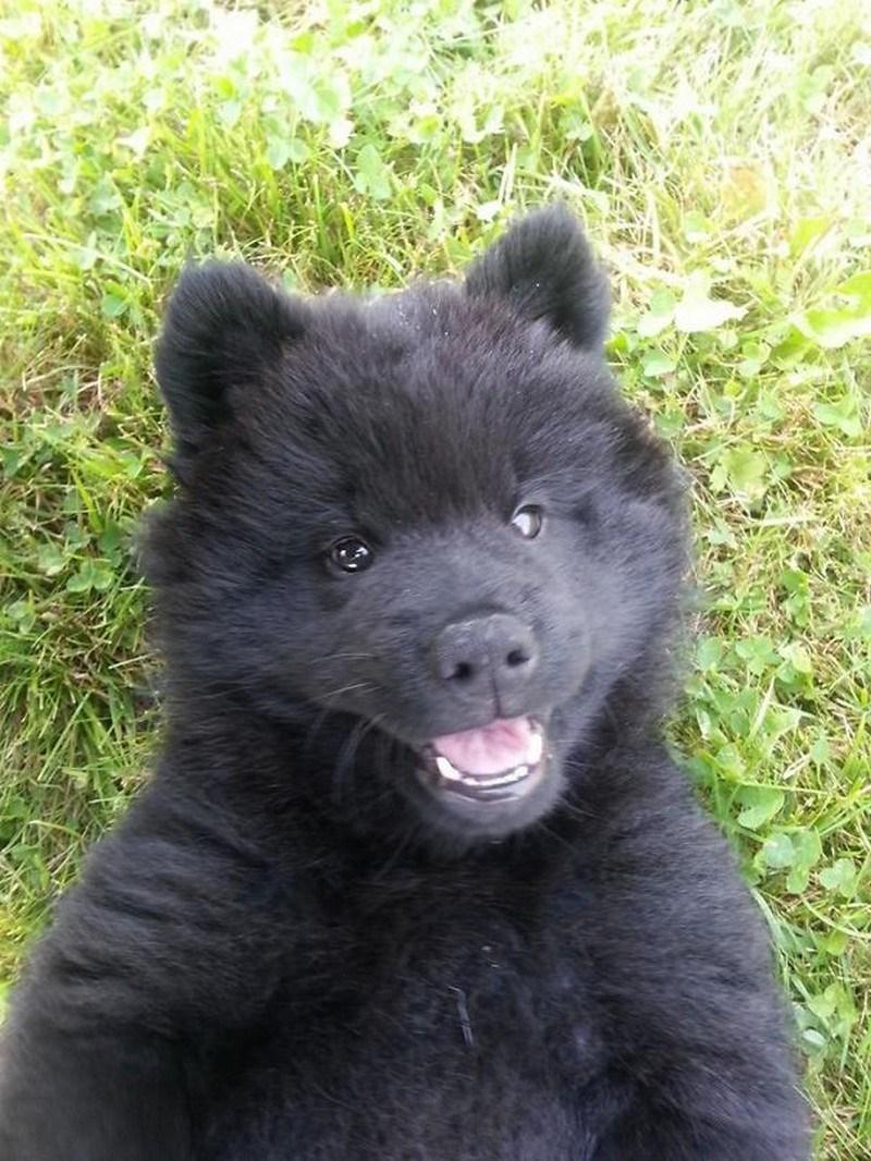 adorable black puppy