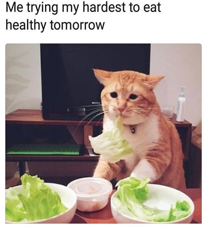meme - Cat - Me trying my hardest to eat healthy tomorrow SONY