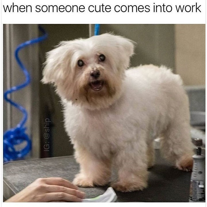 meme - Dog - when someone cute comes into work IG: @ship