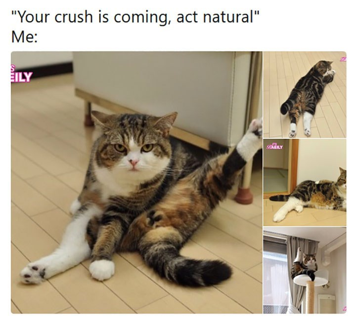 "meme - Cat - ""Your crush is coming, act natural"" Me: EILY BLY"