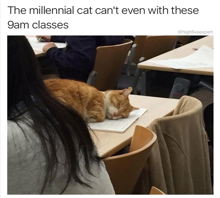 meme - Cat - The millennial cat can't even with these 9am classes @highfiveexpert
