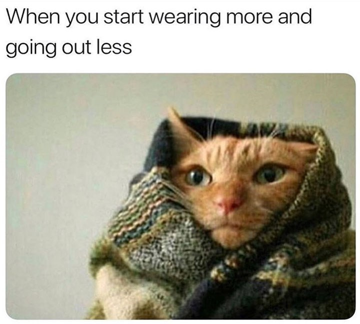 meme - Cat - When you start wearing more and going out less
