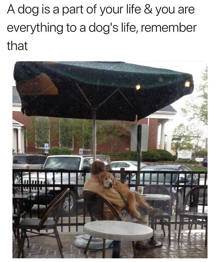 meme - Umbrella - A dog is a part of your life & you are everything to a dog's life, remember that