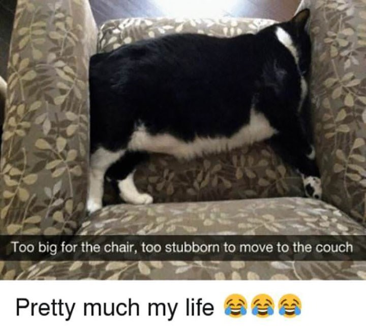 meme - Canidae - Too big for the chair, too stubborn to move to the couch Pretty much my life