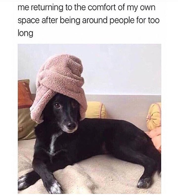 meme - Dog - me returning to the comfort of my own space after being around people for too long