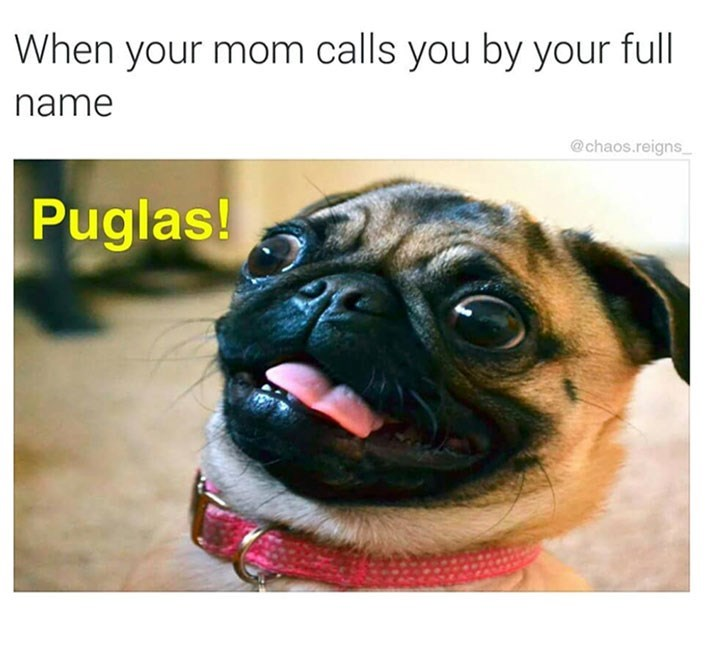 meme - Pug - When your mom calls you by your full name @chaos.reigns Puglas!