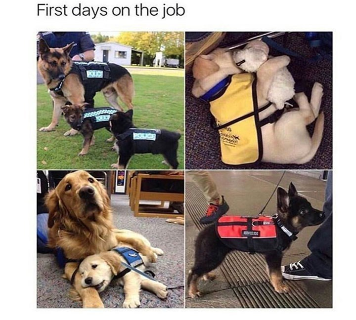 meme - Dog - First days on the job CE