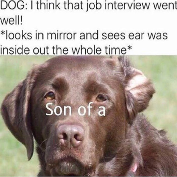 meme - Dog - DOG: I think that job interview went well! *looks in mirror and sees ear was inside out the whole time* Son of a
