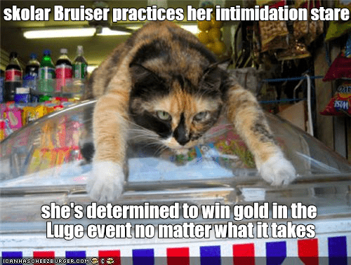 Cat - skolar Bruiser practices her intimidation stare she's determined to win gold in the Luge event no matter whatit takeS ICANHASCHEE2EURGER.coM