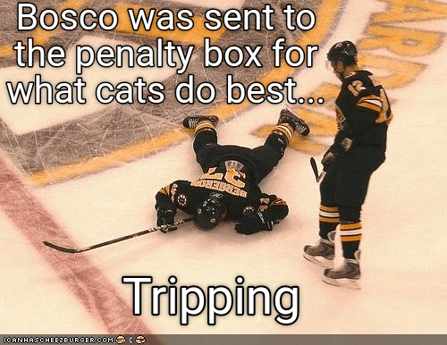 Text - Bosco was sent to the penalty box for what cats do best... Tripping 0C6NHASCHEE2BURGER coM