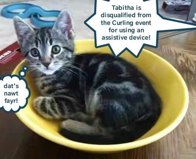 Cat - Tabitha is disqualified from the Curling event for using an assistive device! dat's nawt fayr!