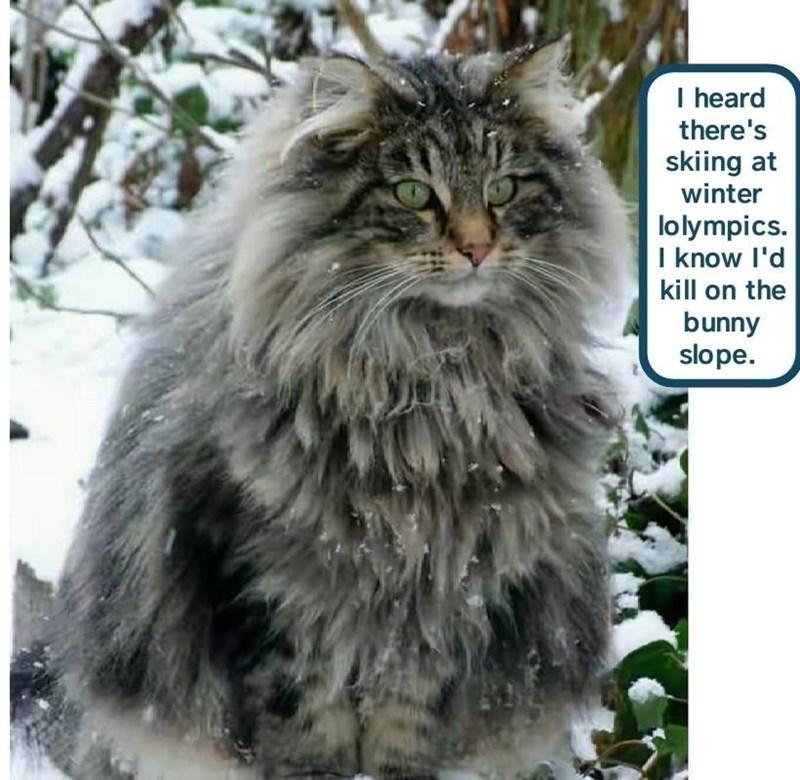 Cat - I heard there's skiing at winter lolympics. I know l'd kill on the bunny slope.