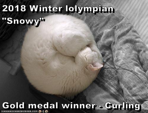 "Nose - 2018 Winter lolympian ""Snowy"" Gold medal winner Curling ICANHASCHEE2EURGER COM"