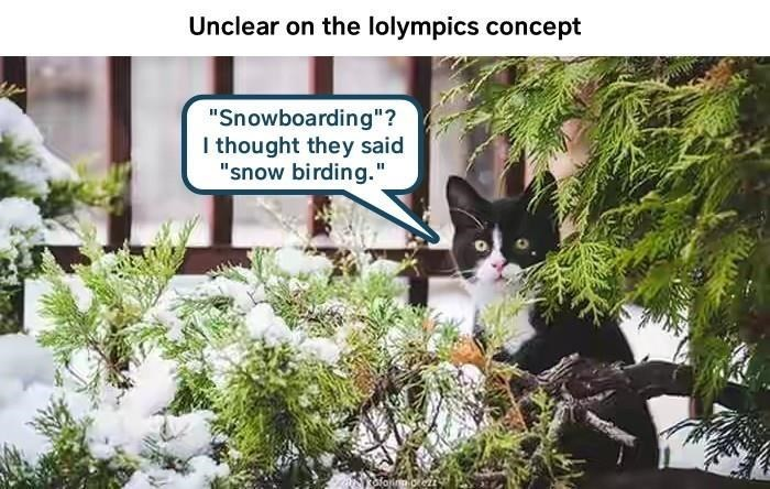 """Cat - Unclear on the lolympics concept """"Snowboarding""""? I thought they said """"snow birding."""""""