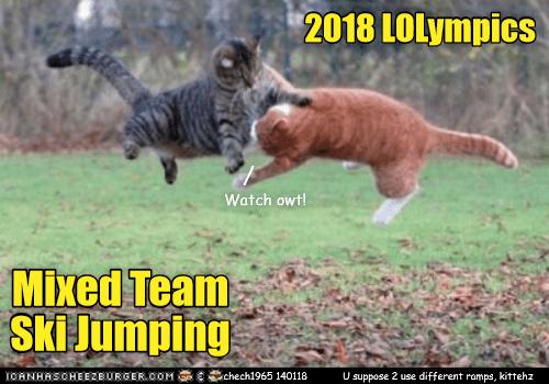 Felidae - 2018 LOLympics Watch owt! Mixed Team Ski Jumping ICANHASCHEEZEURGER.COM chech1965 140118 U suppose 2 use different roamps, kittehz