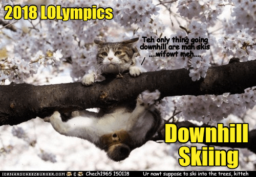 Photo caption - 2018 LOLympics Teh only thing going downhill are mahskis ...wifowt meh... Downhill Skiings Chech1965 150118 ICANHASCHEEZIURGER,COM Ur nawt suppose to ski into the trees, kitteh