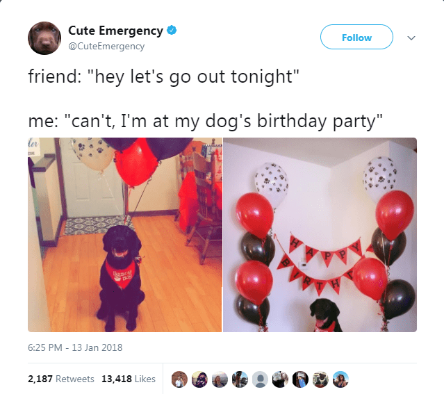 "Red - Cute Emergency Follow @CuteEmergency friend: ""hey let's go out tonight"" me: ""can't, I'm at my dog's birthday party"" ler Banc 6:25 PM 13 Jan 2018 2,187 Retweets 13,418 Likes"