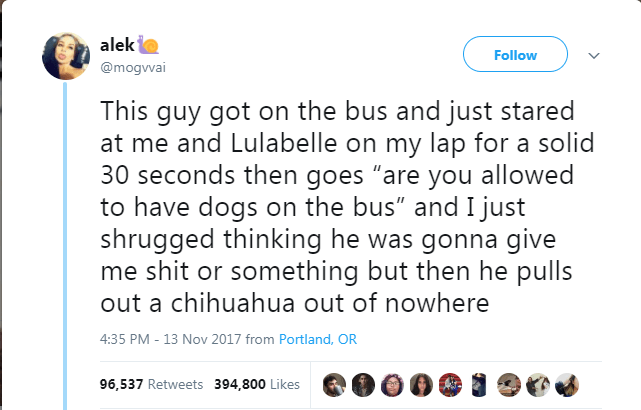 """Text - alek Follow @mogvvai This guy got on the bus and just stared at me and Lulabelle on my lap for a solid 30 seconds then goes """"are you allowed to have dogs on the bus"""" and I just shrugged thinking he was gonna give me shit or something but then he pulls out a chihuahua out of nowhere 4:35 PM - 13 Nov 2017 from Portland, OR 96,537 Retweets 394,800 Likes"""