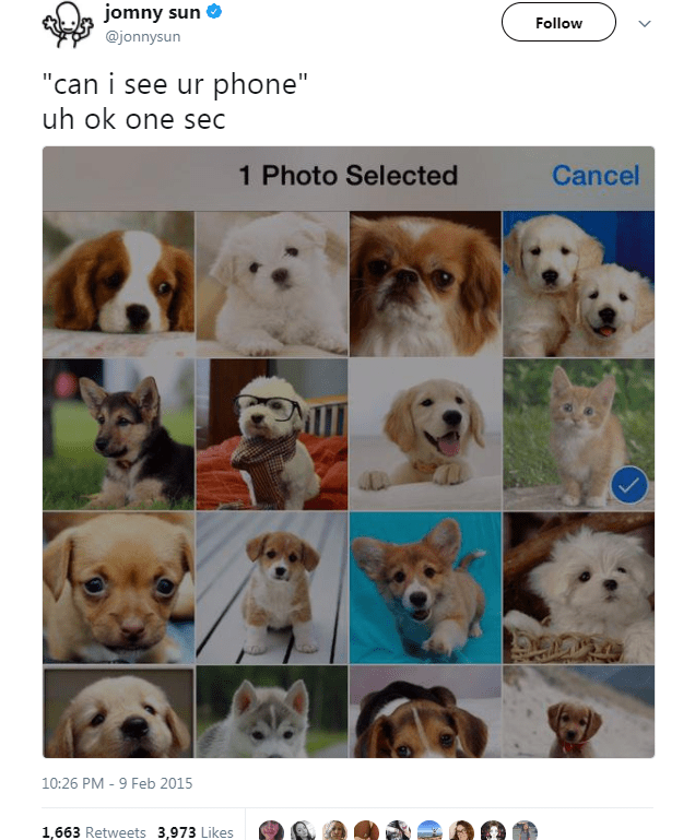 "Dog breed - jomny sun Follow @jonnysun ""can i see ur phone"" uh ok one sec 1 Photo Selected Cancel 10:26 PM - 9 Feb 2015 1,663 Retweets 3,973 Likes"