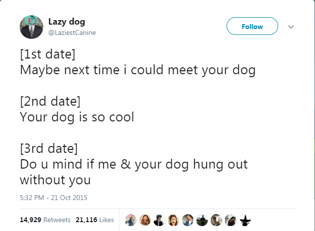 Text - Lazy dog Follow @LaziestCanine [1st date] Maybe next time i could meet your dog [2nd date] Your dog is so cool [3rd date] Do u mind if me & your dog hung out without you 5:32 PM - 21 Oct 2015 14,929 Retweets 21,116 Likes