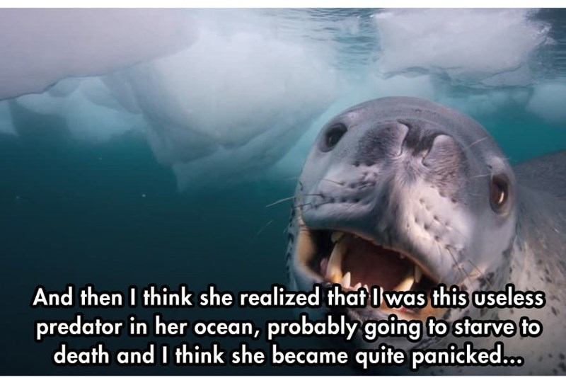 Adaptation - And then I think she realized thaf Iwas this useless predator in her ocean, probably going to starve fo death and I think she became quite panicked...