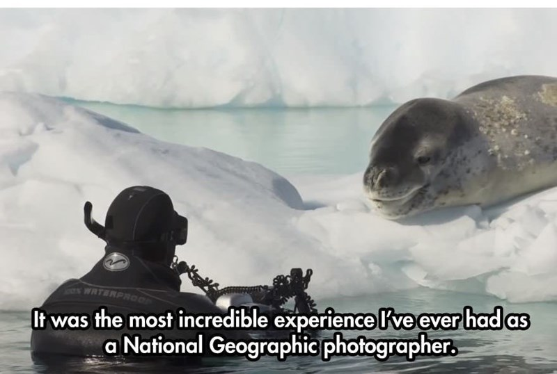 Adaptation - It was the most incredible experiencelve ever had as a National Geographic photographer WATERPROO