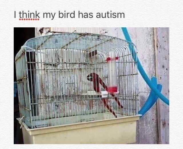 meme - Cage - I think my bird has autism