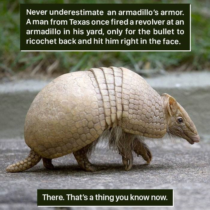 Vertebrate - Never underestimate an armadillo's armor. A man from Texas once fired a revolver at an armadillo in his yard, only for the bullet to ricochet back and hit him right in the face. There. That's a thing you know now.
