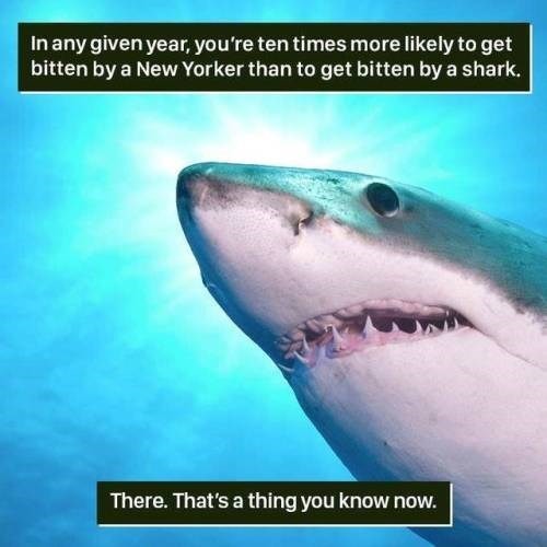 Sand tiger shark - In any given year, you're ten times more likely to get bitten by a New Yorker than to get bitten by a shark. There. That's a thing you know now.
