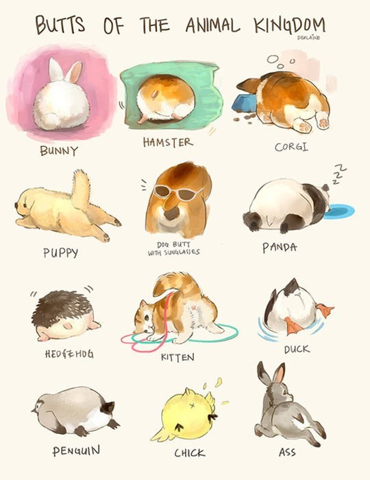 butts illustration animals - 9116432640