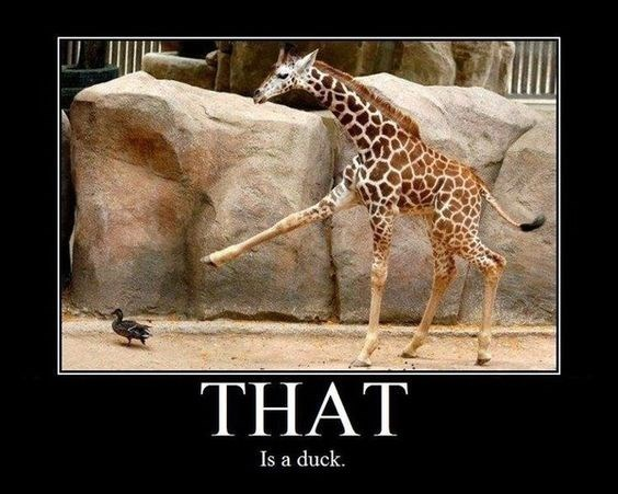meme - Giraffe - THAT Is a duck