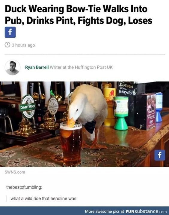 meme - Drink - Duck Wearing Bow-Tie Walks Into Pub, Drinks Pint, Fights Dog, Loses f 3 hours ago Ryan Barrell Writer at the Huffington Post UK Doteea DARTIMOOR f SWNS.com thebestoftumbling: what a wild ride that headline was More awesome pics at FUNSubstance.com