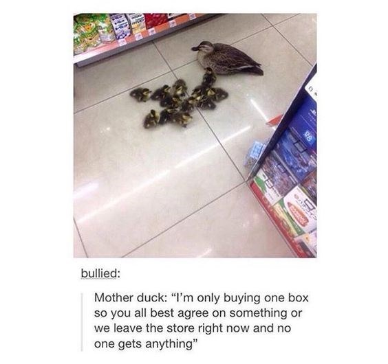 "meme - Text - bullied: Mother duck: ""I'm only buying one box so you all best agree on something or we leave the store right now and no one gets anything"""