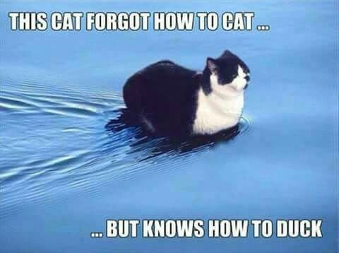 meme - Photo caption - THIS CAT FORGOT HOW TO CAT BUT KNOWS HOW TO DUCK