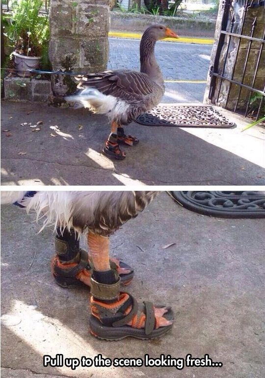 meme - Bird - Pull up to the scene looking fresh..