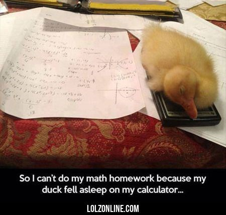 meme - Cat - SoI can't do my math homework because my duck fell asleep on my calculator... LOLZONLINE.COM